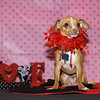 From The Heart Dogs : 10 galleries with 416 photos